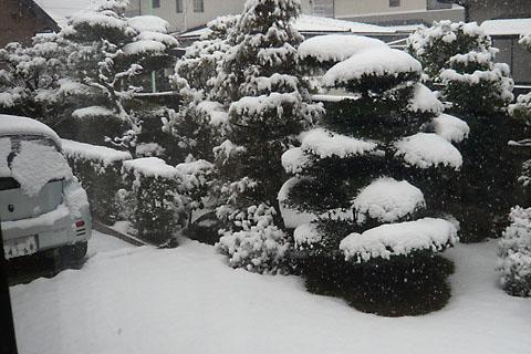 Snow20080209